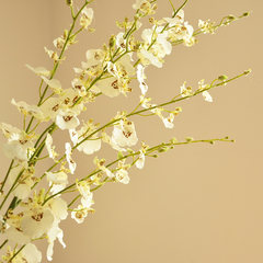 MEMA with 6 branch shipping quality simulation soft white flower of Oncidium F494 A soft white one