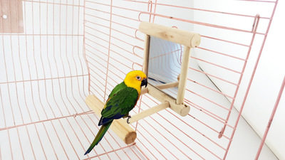 Parrot toy bird mirror parrot stick can be hung on the cage Do not remove the