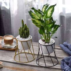 Huaxia original Nordic round table iron art simple metal multi - meat green plant ceramic iron frame One set of white flowerpot + golden iron frame Basin: 11cm diameter, 8cm high, 11cm diameter, 11cm bottom diameter, 15.8cm high, 16cm high