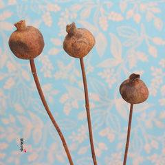 #蘑菇干花#石榴果天然干果 软装家装饰田园复古拍摄背景道具 蘑菇(单支)