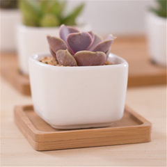 Small square white multi-meat ceramic flowerpot plant flowerpot pot potted tabletop creative mini za 5.3 * 5.3 * 4.2 white