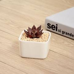 Many meat flowerpots white simple zakka plant basin home office square ceramic floret manufacturers  Large white square basin (single basin) 8.5 * 8.5 * 8.5 cm
