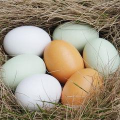 积木制儿童玩具逼真仿真鸡蛋鸭蛋彩蛋DIY手工彩绘涂鸦过家家玩具 白鸡蛋-不含蛋托