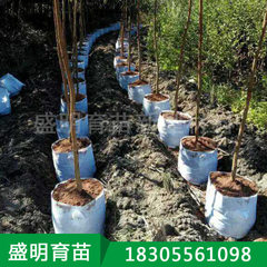 Manufacturer direct selling 40*35 us planting seed white Diameter 40cm* height 35cm