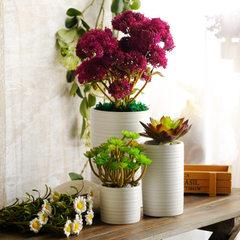 无光白螺旋纹多肉植物陶瓷花盆桌面盆栽欧美现代简约家居园林 CD06520H-1