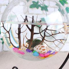 天然海树 水族专用摆件装饰 海藻球微景观水族生态瓶鱼缸养殖铁树 天然海树5cm