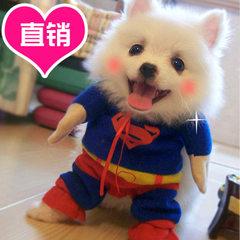 Superman wears a pet suit and a dog suit. Teddy tu xs